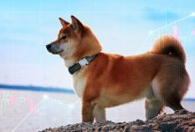 Photo of Data: Shiba Inu (SHIB) whales are responsible for 300% price jump