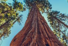 Photo of Sequoia Capital Plans to Invest More in Crypto